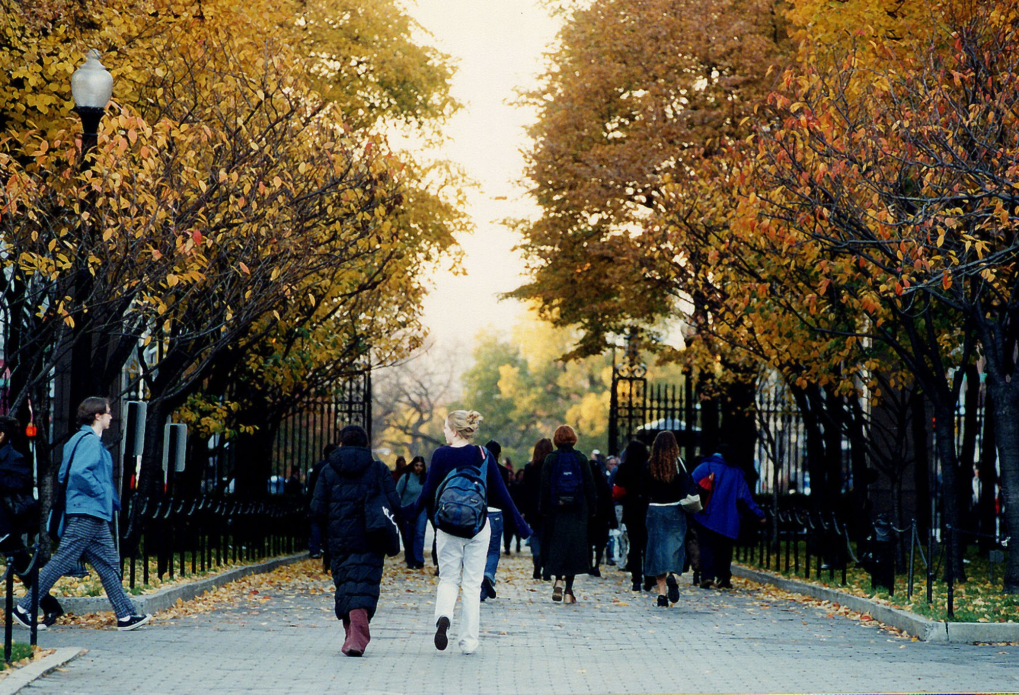 People walking down a wide pathway during autumn. Trees with golden leaves line either side of the path.