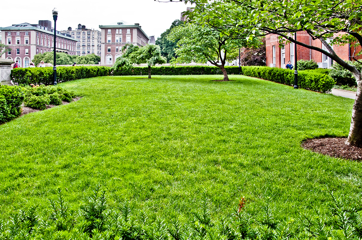 A green, rectangular lawn with a few small trees. Brick buildings can be seen in the background.